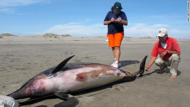 Mass dolphin die-off in Peru