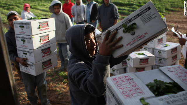 Migrant workers load cilantro in Colorado. The farmer said business is suffering because there are fewer Mexican workers.