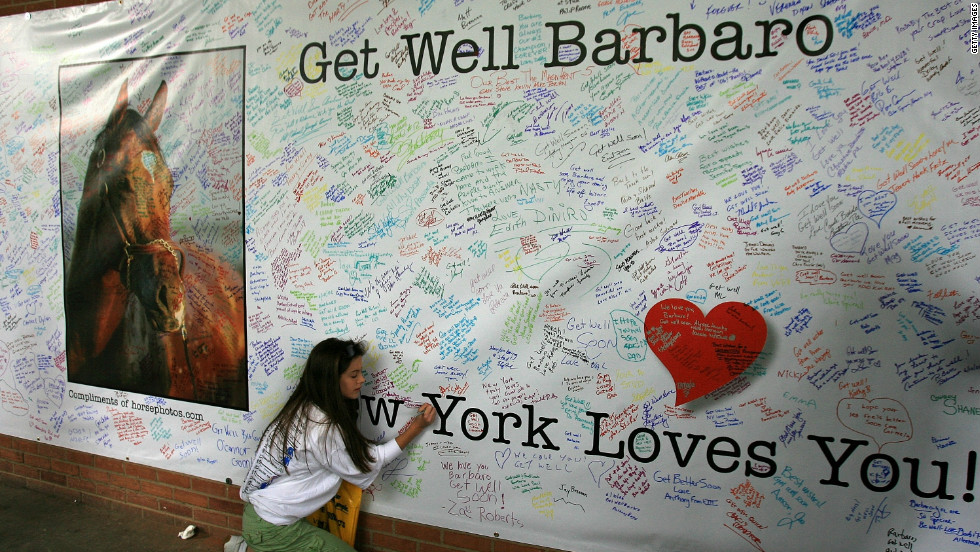 "Hundreds of fans signed a giant ""Get Well"" card for Barbaro. Although efforts were made to save the colt's leg with pioneering surgery, he eventually had to be put down."