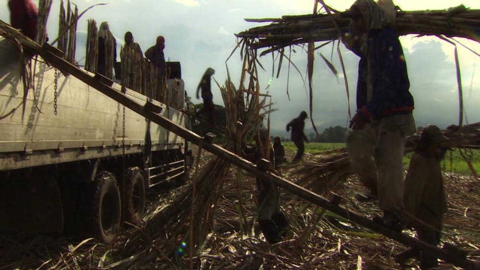 Child Labor in The Philippines Child Labor in Sugar Harvest