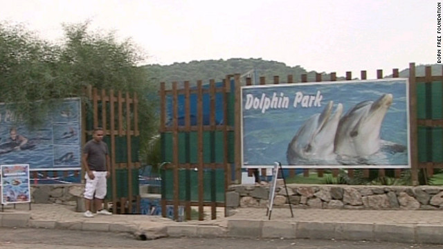 Dolphin parks like the one that held Tom and Misha are common in Turkey's tourist areas but aren't fully regulated.