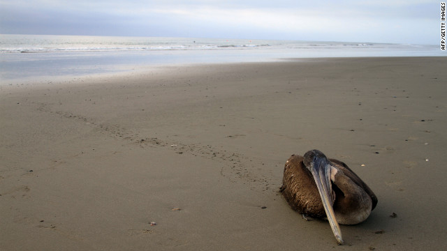 Animal deaths stump experts in Peru