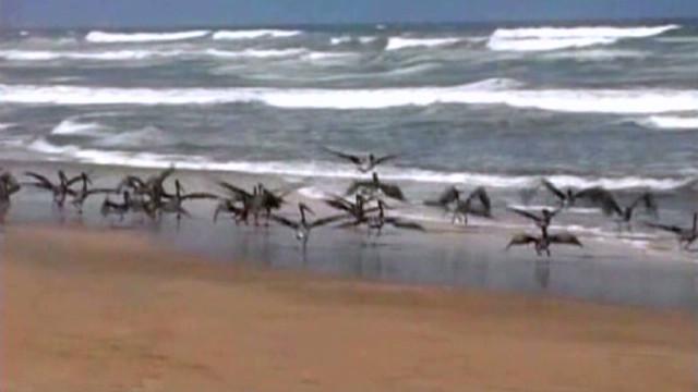 Mystery animal deaths = beach warning