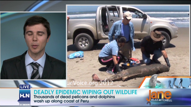What is killing the dolphins in Peru?