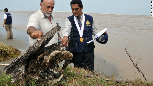 Wildlife engineer Guillermo Boigorria, left, and regional prosecutor Lev Castro inspect sea bird in Peru, which along with Chile has seen a rash of water bird deaths.