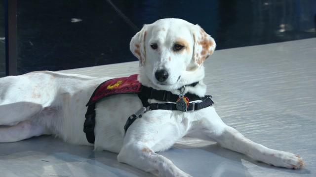 Service dogs help war veterans recover