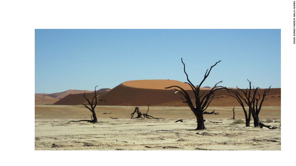 The trees dot the remains of dried-up marshlands, barren clay and salt basins.