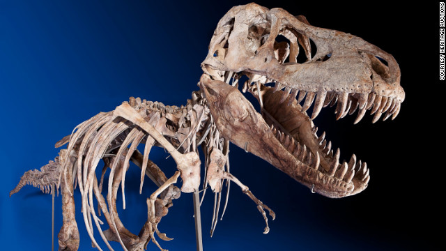 A New York auction house sold the rare skeleton of a Tarbosaurus bataar to an undisclosed buyer for $1,052,500.