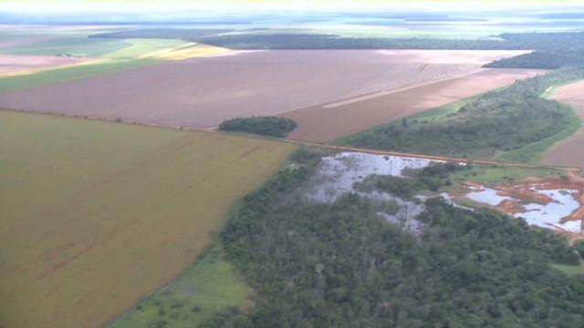 Brazil's president vetoes forest code