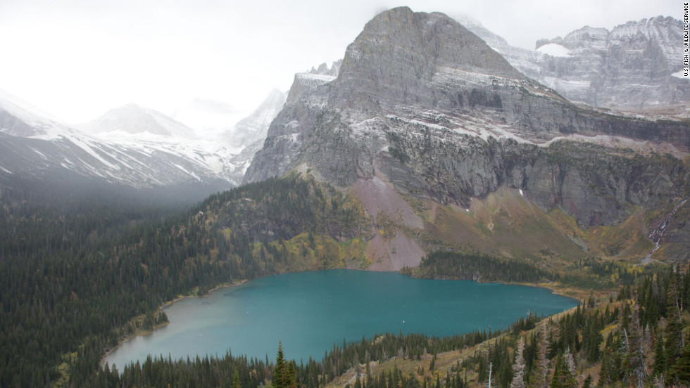Visitors to Glacier National Park have the chance to see everything from elusive wolves, grizzlies and mountain lions to the more common mountain goats, bighorn sheep, elk and moose.