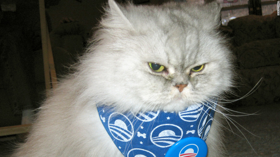 Mysty's owner, Denise Small, says she thinks her cat resembles Newt Gingrich.