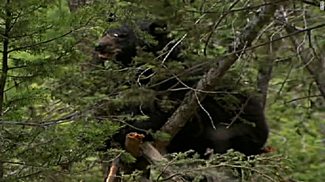 Dead man eaten by bear  identified