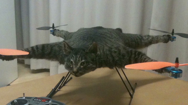 tsr moos cat copter_00000813