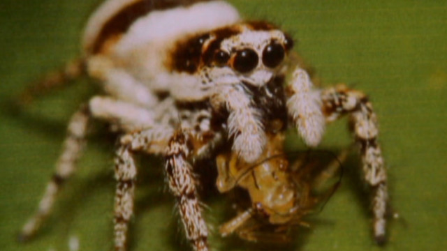 Can spiders hunt in space?
