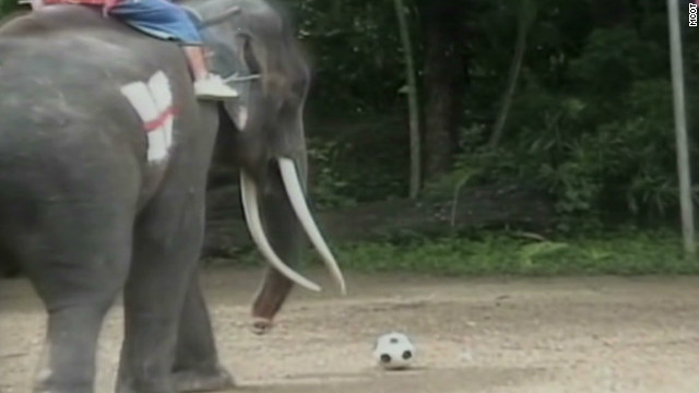 Watch elephants play soccer