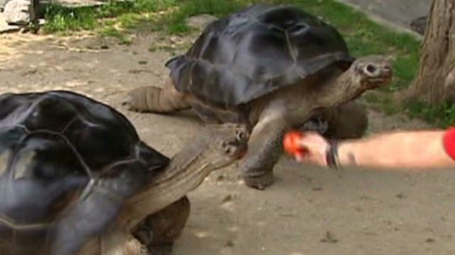 pkg moos turtle divorce_00001823