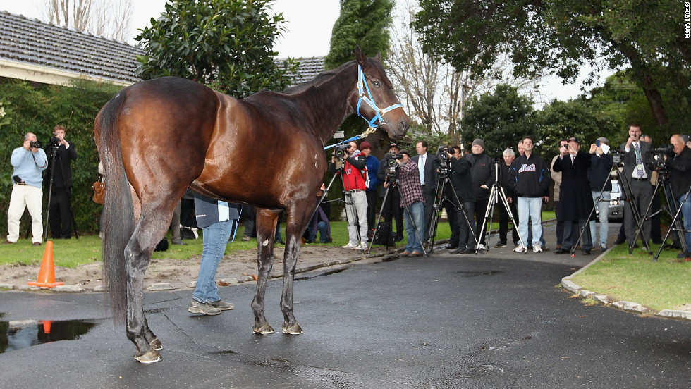 Black Caviar is a major attraction in her homeland, and is seen here at a press call in Australia before departing for the UK.