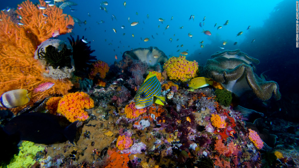 The International Union for Conservation of Nature (IUCN) has published its annual Red List, which details threats to animals and plants. The 2012 report has assessed more than 60,000 species. Coral reefs are among the most threatened organisms on Earth, with a third threatened with extinction. More than 275 million people are dependent on coral reefs for food, coastal protection and livelihoods, according to the IUCN.
