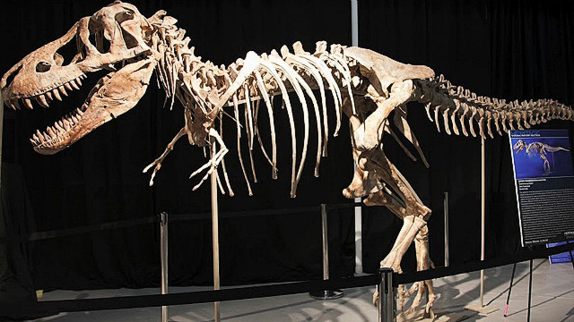Can extinct species be brought back?