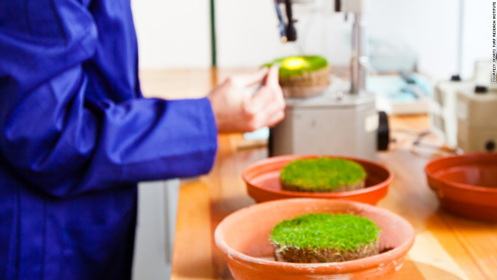Scientists at STRI continue to test varieties of grass to determine the most appropriate for different sports.