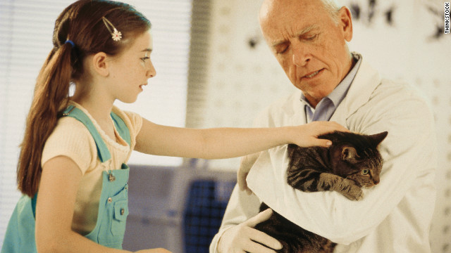 Taking proper care of your aging cat can drastically extend its lifespan.