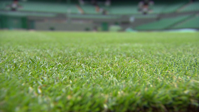 Keeping Wimbledon's grass green