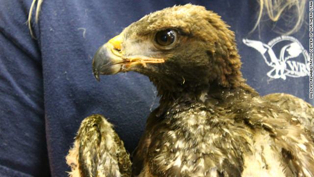 Phoenix also had burns to his feet and around his beak.