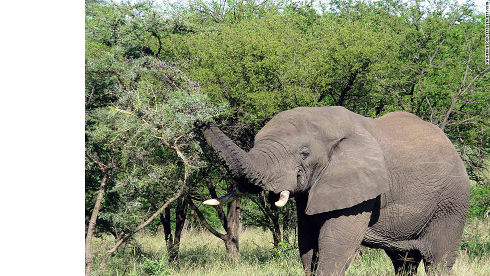 More than 2,000 elephants live in the Serengeti National Park.