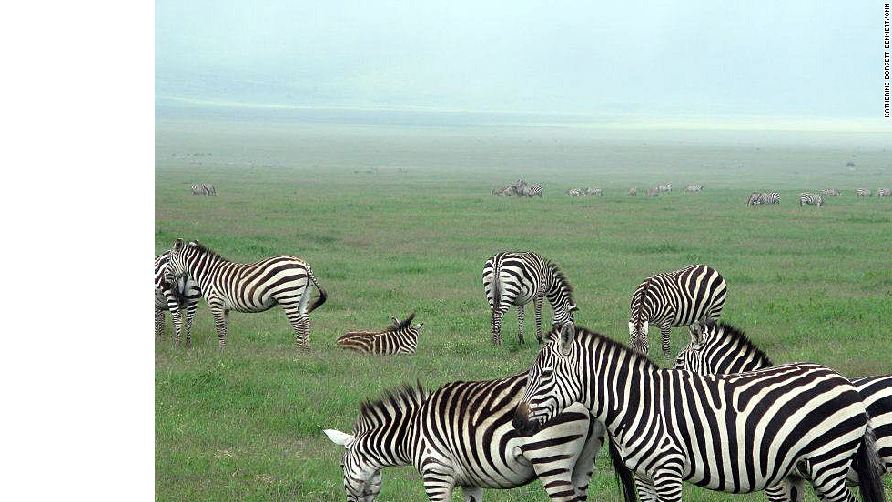Tanzania offers some of the best safari experiences in the world.