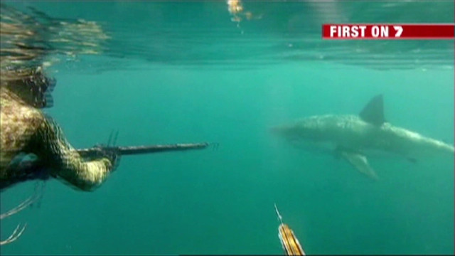 Divers fend off great white shark
