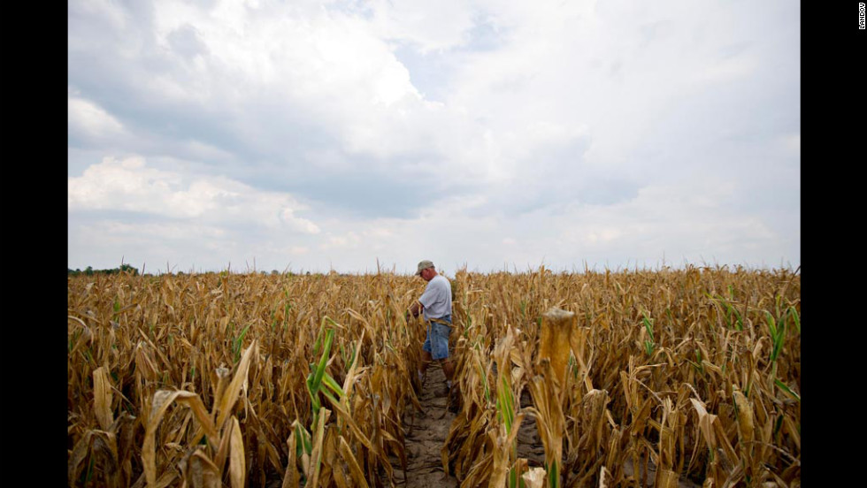 Farmer Albert Walsh walks through his drought-damaged corn field in Carmi, Illnois, on July 11.