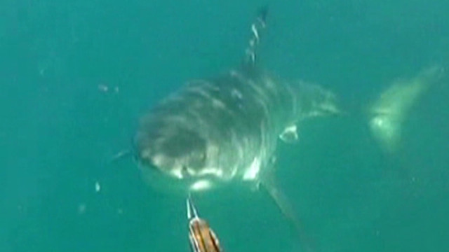 Shark rips surfer in half in Australia