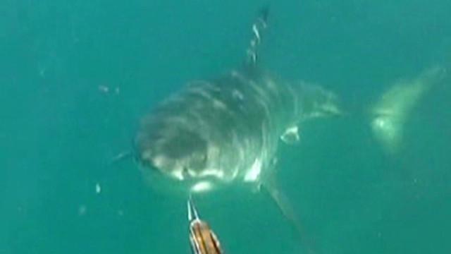 Shark rips surfer in half in Australia