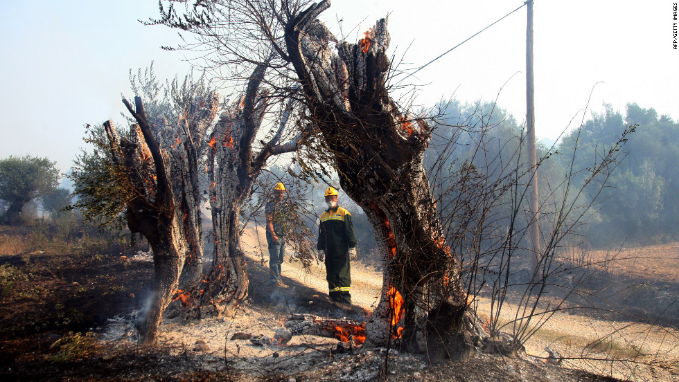 Spanish firefighters look at an olive tree burned by the forest fire on Monday near the Spanish village of Figueras.