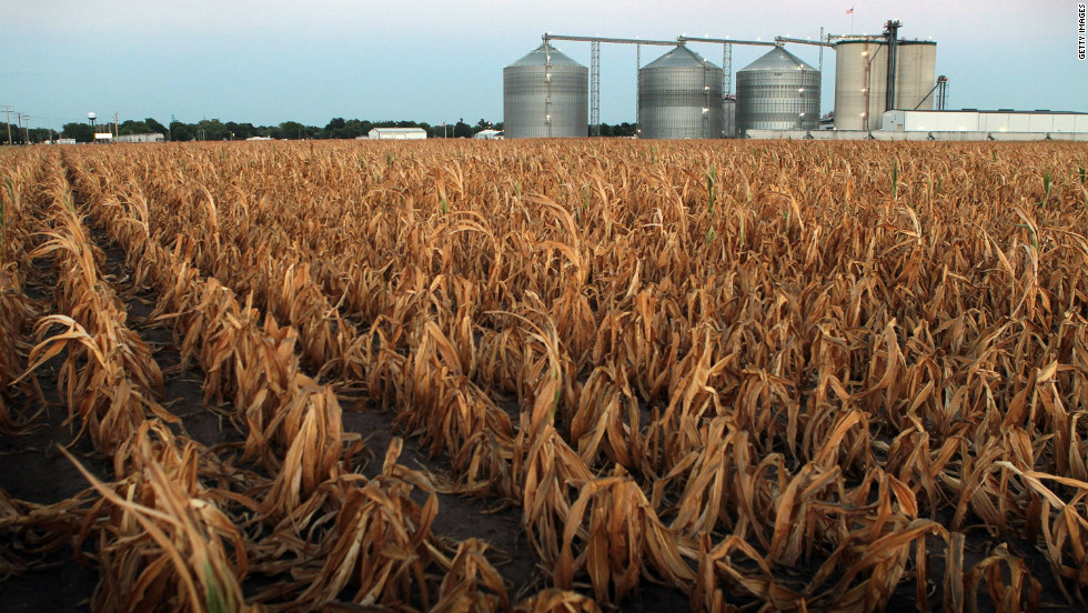 A field of dead corn sits next to the Lincolnland Agri-Energy ethanol plant in Palestine, Illinois, on Wednesday, July 25.