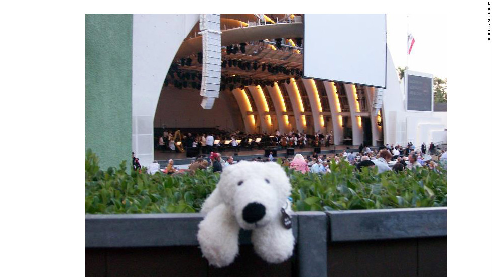 Bear attends a performance of Beethoven's Ninth at the Hollywood Bowl.