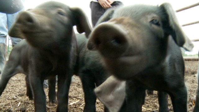 Drought spawns 'sponsor a pig' idea