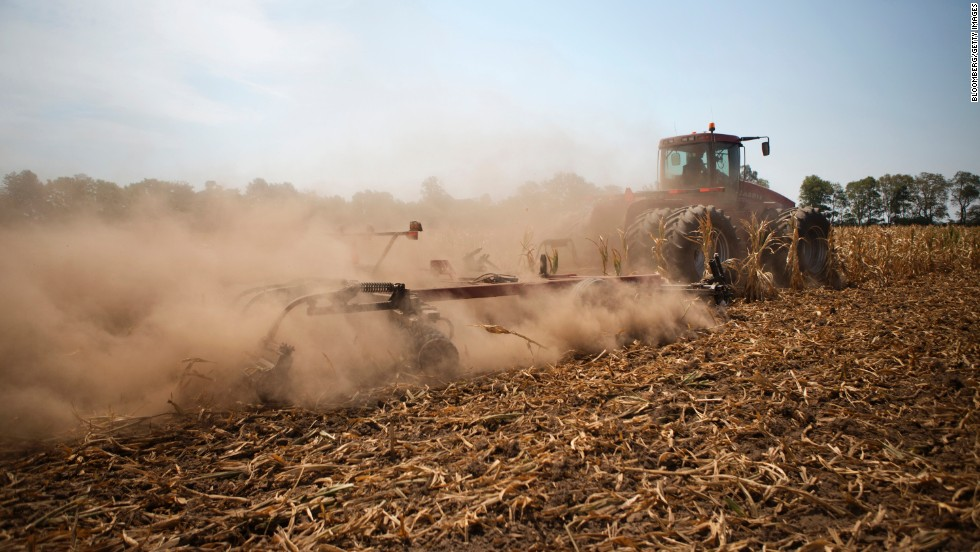 A tractor cuts down corn in a field designated as zero-yield on a farm in Vigo County, Indiana, on Tuesday, July 31. The U.S. Department of Agriculture has declared more than half the counties in the country natural disaster areas as drought sears millions of acres of pasture and cropland.