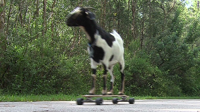pkg skateboarding goat sets world record_00001030