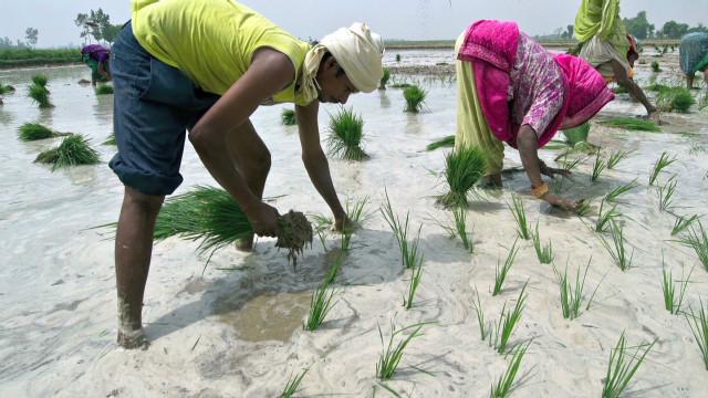 Weak monsoon season impacts India crops