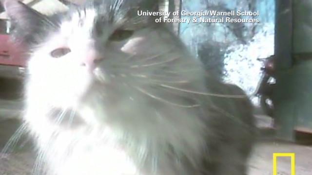 pkg moos kitty cam_00000427