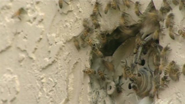Thousands of bees invade home