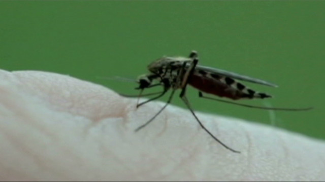 US west nile mosquitoes_00000519