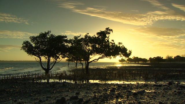 inside africa madagascar biodiversity c_00001317