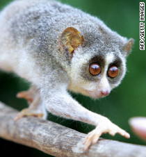 Airport guards catch man smuggling rare primate in his ...