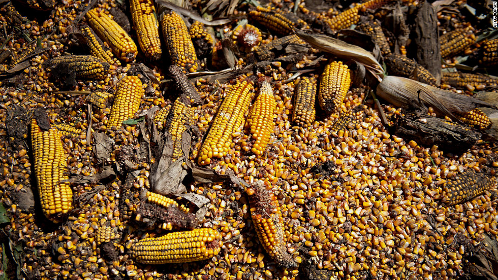 Corn killed during drought covers a field in Le Roy, Illinois, on September 11, 2012.  The yearlong drought plagued more than half the country and was the most extensive drought to affect the United States since the 1930s, the center said. Its costs are estimated at $30 billion.