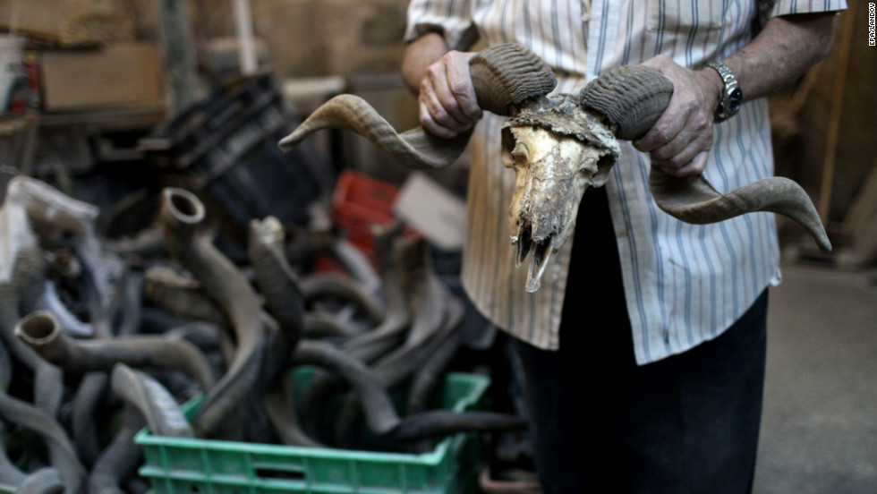 Avraham Ribak poses with a ram's skull at his shofar factory in Tel Aviv, Israel, on Friday. The shofar is used mainly on Rosh Hashanah, the Jewish New Year, and Yom Kippur, the Day of Atonement. It is blown in synagogues to mark the end of the fast at Yom Kippur and at four particular occasions in the prayers on Rosh Hashanah.