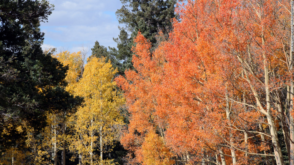 Fall foliage is on display at Carson National Forest, one of five national forests in New Mexico. Elevations in the 1.5 million-acre park range from 6,000 feet to 13,161 feet at Wheeler Peak, the highest point in the state.
