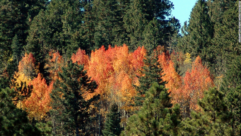 For those not able or willing to hike, the 16-mile Santa Fe National Forest Scenic Byway on New Mexico Highway 475 provides a way via car or bus to enjoy the leaves changing in this national forest.