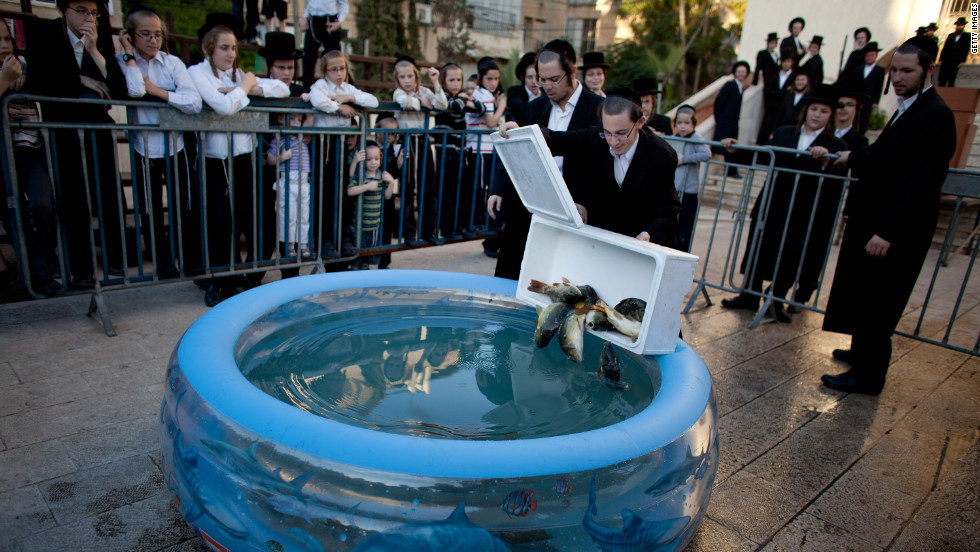 Ultra-Orthodox Jews drop fish into a plastic pool as they prepare for the ritual of Tashlich.